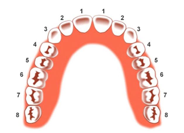 Số thứ tự của răng